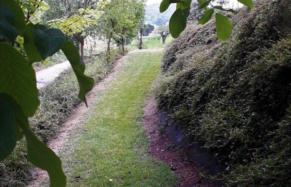 verso uscita passeggiata tra gli alberi